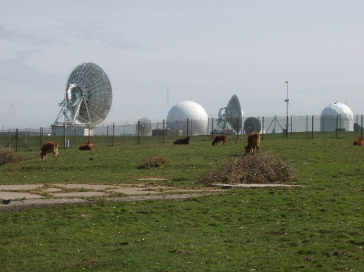 Cattle by GCHQ radio station